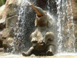 Elephant Waterfall